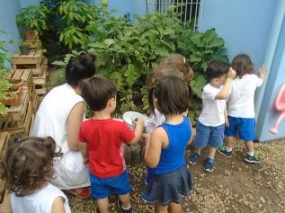 educaca-ambiental-escola-sv-montessoriana